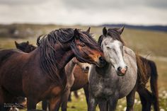 Bosnia's untamed heart: wild horses. Strength lies in peace. Now I'm pretty sure, it were wild horses who invented this wisdom. This work is the first part of a photo series which h…