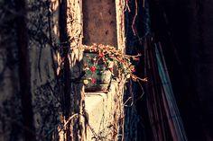Kakumei - « Pot bleu » - #packshot #photoart #flowers #freebies