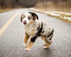 Aussie Cutie Pie