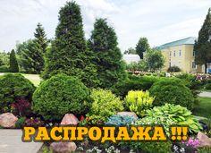Питомник Туй в Москве - Гарантия низкой цены и высокого качества