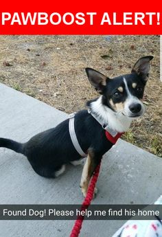 Is this your lost pet? Found in Santa Ana, CA 92703. Please spread the word so we can find the owner!  black Chihuahua with white and tan  Nearest Address: Near W Bishop St & S Baker St