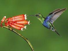Resultado de imagen para como pintar un cuadro con colibries