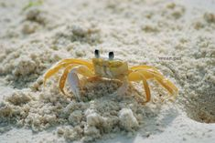 We can find this beautiful animals in all the world's oceans, in fresh water and on land, generally covered with a thick exoskeleton and they have a single pair of pincers. 📷 Credit: Pixabay. #crab #photo #wild #beach #free #animals #photography #golden #nature #friends #cute #animal #love #cangrejos #Wear #Pet #WearPet #cangrejo #playa #amigo #plage #crabe #amie #animale Animal Photography, Photography Tips, Nature Photography, Digital Photography, Wild Animals Pictures, Animal Pictures, Tulum, Beautiful Scenery Pictures, Online Pet Store