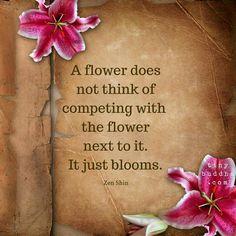 Flowers bloom