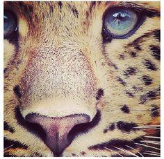 Cheetah is my favorite animal and print