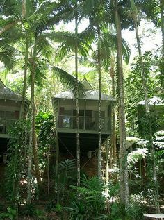 Eco-Resorts: The World's 10 Most Relaxing Destinations For Sustainable Tourism (PHOTOS) Daintree Ecolodge & Spa, Queensland, Australia