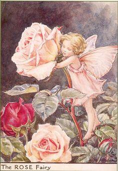 Flower fairies:  The Rose Fairy Cicely Mary Barker - 1930's Print