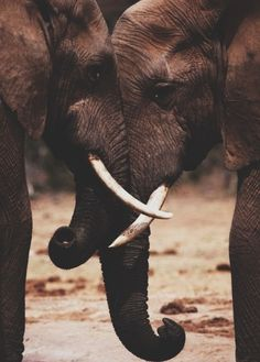 The world behind your eyes - Natur - Tiere Cute Creatures, Beautiful Creatures, Animals Beautiful, Beautiful Beautiful, Elephant Wallpaper, Animal Wallpaper, Elephant Love, Elephant Art, Elephant Photography