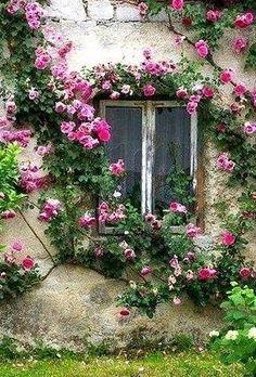 Bonita Janela rodeada de flores que transmite calma e bem-estar. Clematis, Jardin Decor, Climbing Roses, Rose Cottage, Plantation, Dream Garden, Garden Inspiration, Travel Inspiration, Beautiful Flowers