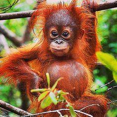 Muchos animales adorables viven en el selva, como eso mono.