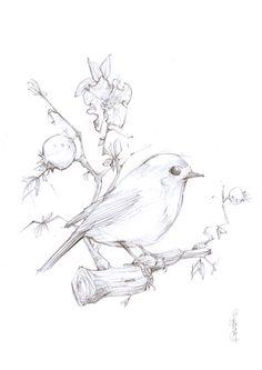 Drawings by chiara rogazzo, via Behance