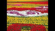 CCB Hinos cantados com flores especiais