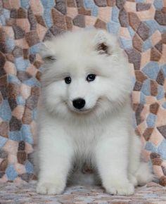 Adorable Sammy Puppy
