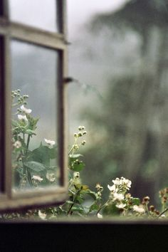 What is a moon garden? A moon garden contains white flowers and silvery foliage that seem to sparkle and reflect light. I wanted to keep thi. Window View, Open Window, Vie Simple, Moon Garden, Through The Window, All Nature, Flowers Nature, Spring Flowers, Foto Art