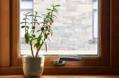 10 of the Best Plants For Your Workspace – Makeful Succulent Display, Jade Plants, Cool Plants, House Plants, Succulents, Good Things, Garden, Fall, Home