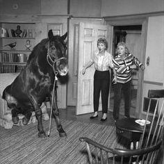 I will do this someday if i get a mini shetland pony!