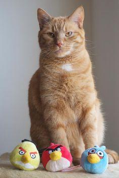 Baxter Cat Food Commercial