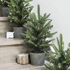 Potted Spruce Christmas Tree - 1ft (Pre lit) | Christmas Trees | Christmas Decorations | Christmas | The White Company UK