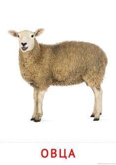 Woodland Animals, Farm Animals, Develop Pictures, Clay Birds, Gernal Knowledge, Craft Sale, Say Hi, Montessori, Sheep