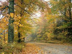 category Autumn photos http://earth66.com/autumn/crisp-autumn-afternoon-vermont/