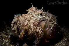 Underwater Photo Location: Anilao