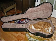 25 Awkward Cat Sleeping Positions: #26-50 - BuzzFeed Mobile  -> #43 The Guitarist (who looks just like my brother Gumbo aka Goober)