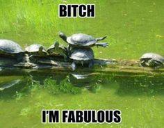 B*tch I'm A Fabulous Turtle