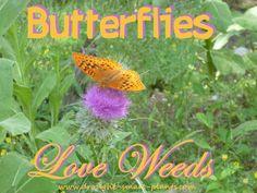 Pollinators - bees, butterflies and many more insects http://www.drought-smart-plants.com/pollinators.html?utm_content=buffercc980&utm_medium=social&utm_source=pinterest.com&utm_campaign=buffer#axzz3eGQqlRNO