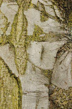 Tree Bark by ngawangchodron