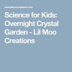 Science for Kids: Overnight Crystal Garden - Lil Moo Creations