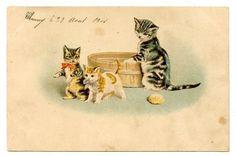 vintage-cat-postcard-Maguire-tabby-cat-mum-prepares-bath-for-kittens-1908
