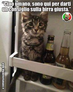 Clicca sull'immagine per visitare il sito. #Animali, #Cibo, #Gatti #Divertenti, #Funny, #Funnypics, #Humor, #Humour, #Immagini, #Immaginidivertenti, #Italiane, #Lol, #Meme, #Memeita, #Memeitaliani, #Memes, #Memesita, #Memesitaliani, #Pics, #Umorismo, #Vignette, #VignetteitalianeIt #italianhumor