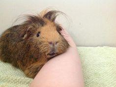 happy piggie!