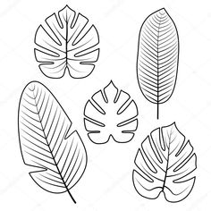 Illustration of Tropical Palm leaves isolated on white background. Used illustration for coloring book, posters, invitations. vector art, clipart and stock vectors. Deco Jungle, Leaf Template, Owl Templates, Crown Template, Applique Templates, Flower Template, Applique Patterns, Leaf Outline, Leaf Drawing