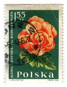 Poland Postage Stamp: Begonia    c. 1964  part of the Garden Flowers series.