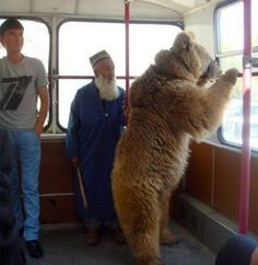 Bears In Russian Streets  Fact Or Fiction  Lazer Horse
