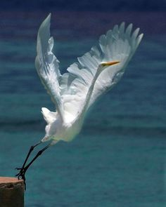 Egret photo by toshiba-s705