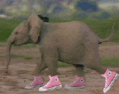 lustiges Bild 'lauf Eelefantenbaby lauf.gif'- Eine von 22668 Dateien in der Kategorie 'witzige Bilder' auf FUNPOT.