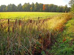 September Field, Keene, NH
