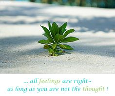 ... all #feelings are right~ as long as you are not the #thought ! ( #Samara )