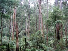 Dandenong-Ranges-Nationalpark – Wikipedia