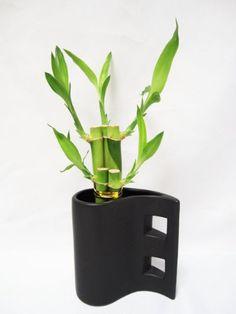 9GreenBox - Live 5 Style Lucky Bamboo Arrange w/ Black Hand Paint Tear Drop Ceramic Pot