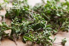Kuchařka ze Svatojánu: MAJORÁNKA Korn, Parsley, Herbs, Plants, Herb, Plant, Planets, Medicinal Plants