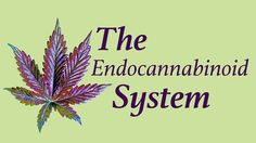 """""""The endogenous cannabinoid system, named after the plant that led to     its discovery, is perhaps the most important physiologic system     involved in establishing and maintaining human health.""""  — Dr. Dustin Sulak  It's becoming increasingly clear that stimulating and supporting your"""