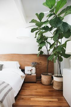 Keeping Your Fiddle Fig Alive (Or Going Faux) - Hither & Thither
