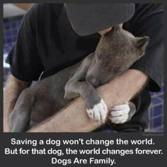 Don't Buy! Don't Breed! Adopt!
