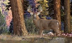Whitetail Deer Paintings | Whitetail Deer Paintings - Granddaddy of Them All Painting by ...