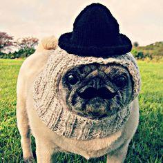 Pugs Dressed Up, Pet Clothes, Cowboy Hats, Snug, Winter Hats, Dress Up, Facebook, Pets, Clothing