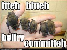 itty bitty bats