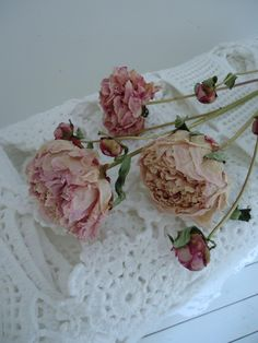 Dried peonies on lace